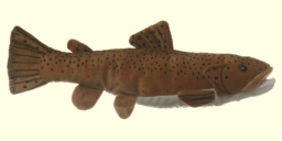 Stuffed Brown Trout