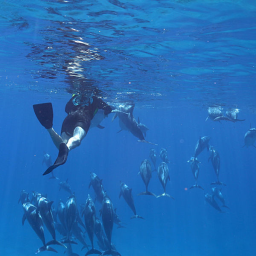 Dolphin and Snorkel Tour - Oahu